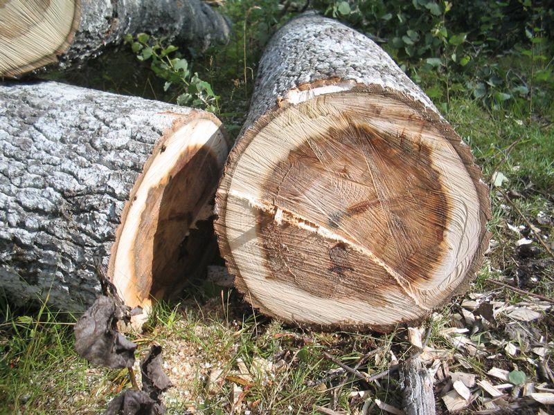 Opdateret Træfældning   Indhent priser på fældning af træer her ZF75
